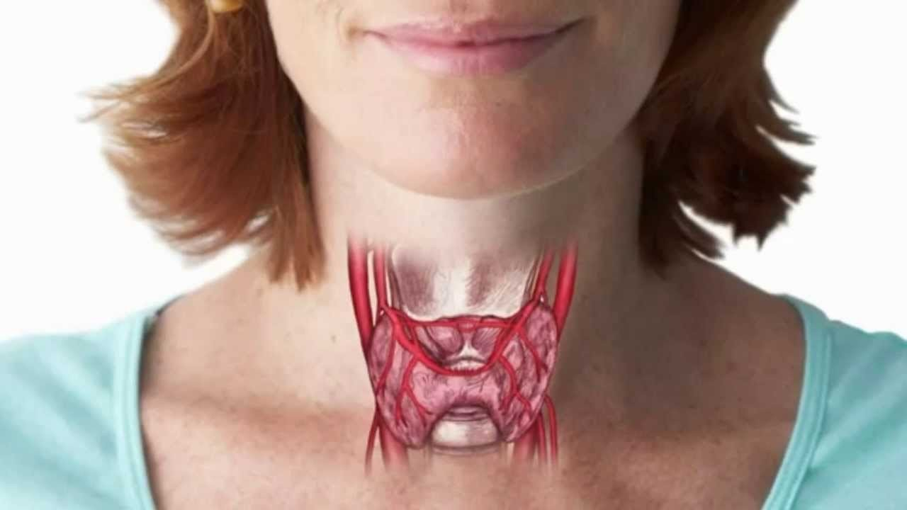 Какое отношение имеет щитовидная железа?